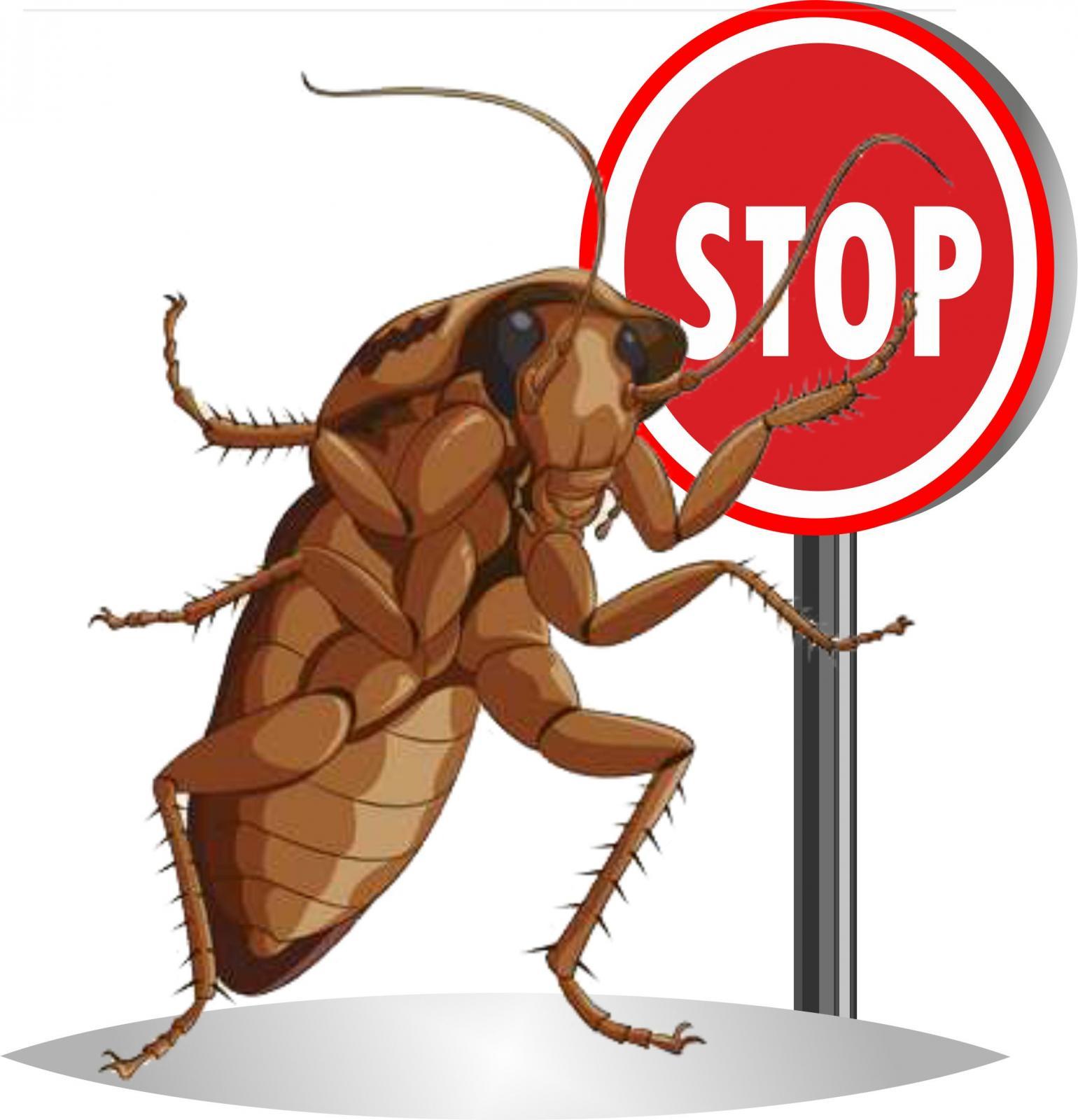 картинки борьбы с тараканами роковая женщина